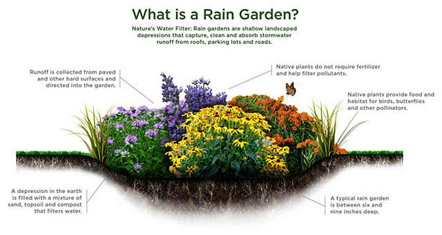 Adding a Rain Garden to Your Landscaping